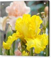 Irises Botanical Garden Yellow Iris Flowers Giclee Art Prints Baslee Troutman Acrylic Print