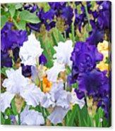 Irises Flowers Garden Botanical Art Prints Baslee Troutman Acrylic Print