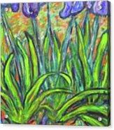 Irises In A Sunny Garden Acrylic Print