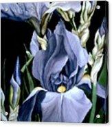 Irises In Blue Acrylic Print