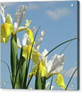 Irises In Blue Sky Art Print Spring Iris Flowers Baslee Troutman Acrylic Print