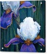 Irises Acrylic Print by Tanja Ware