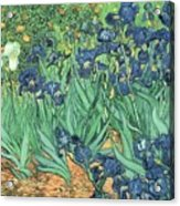 Irises by Vincent Van Gogh Acrylic Print