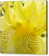 Irises Yellow Brown Iris Flowers Irises Art Prints Baslee Troutman Acrylic Print