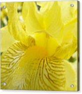 Irises Yellow Brown Iris Flowers Irises Art Prints Baslee Troutman Acrylic Print