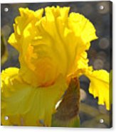 Irises Yellow Iris Flowers Art Prints Floral Canvas Baslee Troutman Acrylic Print