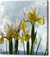 Irises Yellow White Iris Flowers Storm Clouds Sky Art Prints Baslee Troutman Acrylic Print