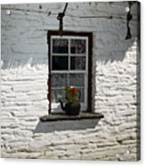 Irish Kettle Of Geraniums County Cork Ireland Acrylic Print