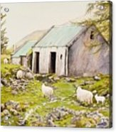 Irish Sheep Farm Acrylic Print