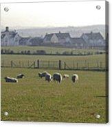 Irish Sheep Farm I Acrylic Print