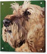 Irish Terrier Acrylic Print