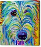 Irish Wolfhound - Angus Acrylic Print by Alicia VanNoy Call
