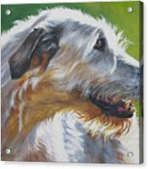 Irish Wolfhound Beauty Acrylic Print