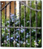 Iron Gate And Blue Flowers Acrylic Print