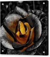 Iron Rose Acrylic Print