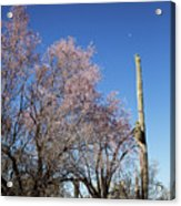 Ironwood And Saguaro Acrylic Print