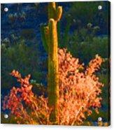 Ironwood Saguaro Dance - Bold Acrylic Print