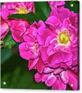 Irresistible Rose - Paint Acrylic Print