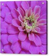 Irridescent Pink Acrylic Print