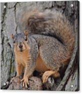 Irritated Squirrel Acrylic Print