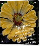 Isaiah 40.8 Acrylic Print