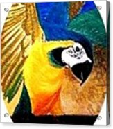 Island Bird Se Acrylic Print