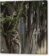 Israel, Tree Trunk Acrylic Print