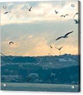 Istanbul, Morning Acrylic Print