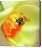 It Just Wouldn't Bee Spring Without ... Acrylic Print