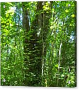 It S  Green Acrylic Print