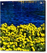 It Was All Yellow... Acrylic Print