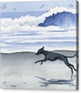 Italian Greyhound At The Beach Acrylic Print