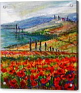 Italy Tuscan Poppies Acrylic Print