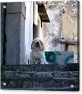 Italy's Capri Doggie Acrylic Print