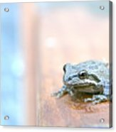 It's A Good Day To Be A Frog Acrylic Print