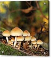 It's A Small World Mushrooms Acrylic Print by Jennie Marie Schell