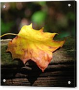 Its Fall Acrylic Print