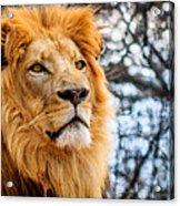 It's Good To Be King Acrylic Print