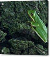 Its Hard To Be Green Acrylic Print by Douglas Barnett