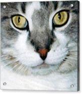 It's In The Cat Eyes Acrylic Print
