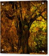It's Not The Angel Oak Acrylic Print