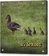 Its Spring Acrylic Print