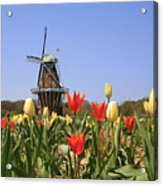 Its Tulip Time Acrylic Print