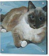 Itty Bitty Kitty Acrylic Print