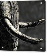 Ivory And Mud Acrylic Print