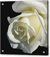 Ivory Rose Flower On Black Acrylic Print