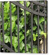 Ivy And Gate Acrylic Print