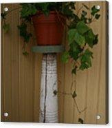 Ivy Corner Acrylic Print
