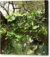 Ivy-covered Arch At The Alamo Acrylic Print