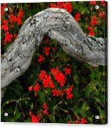 Ivy Geraniums And Log Acrylic Print